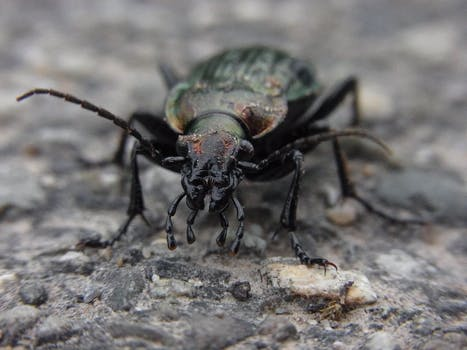 This beetle referred to as woodworm requires specialists to treat it